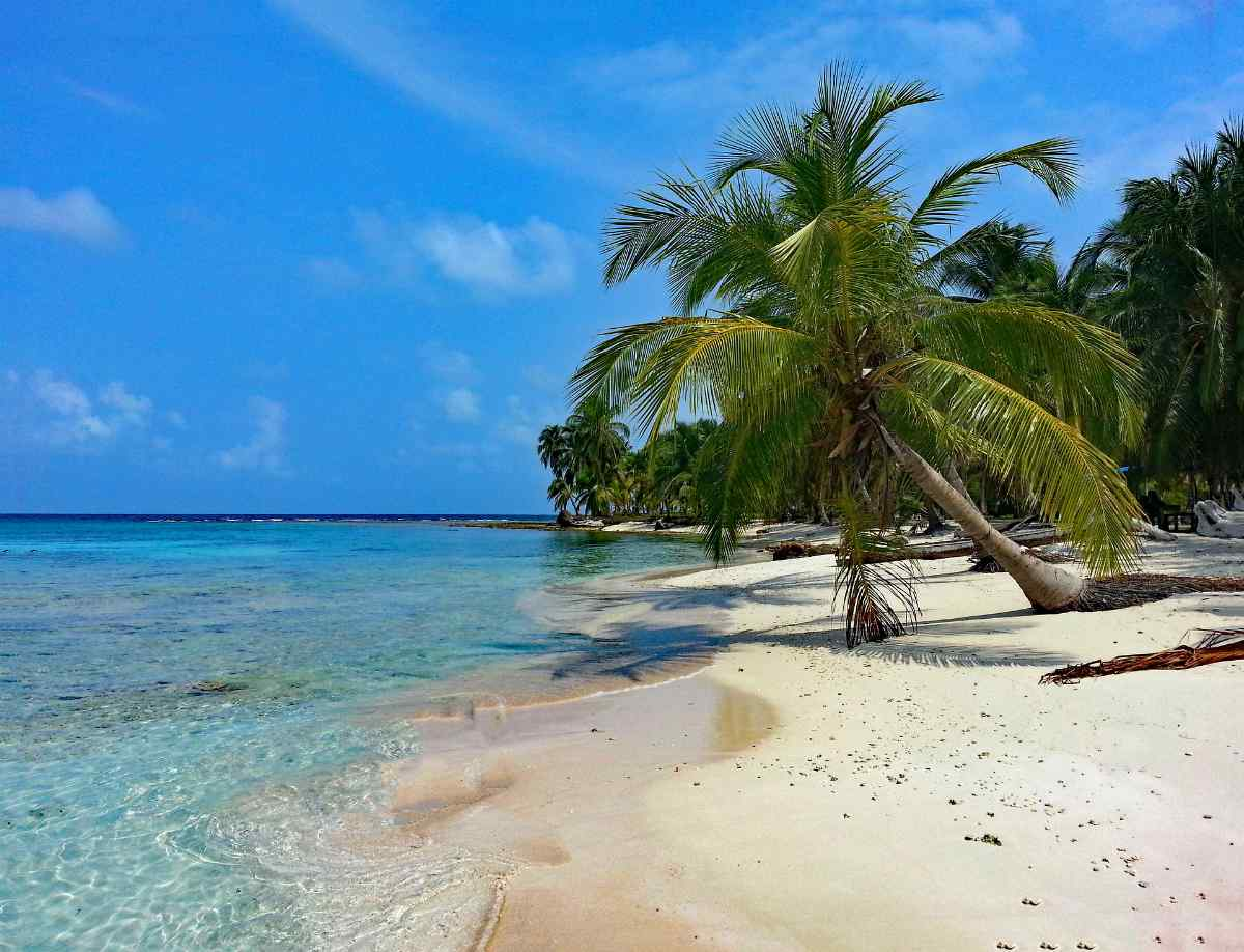 coconut tree by the beach   Panama   best retirement countries