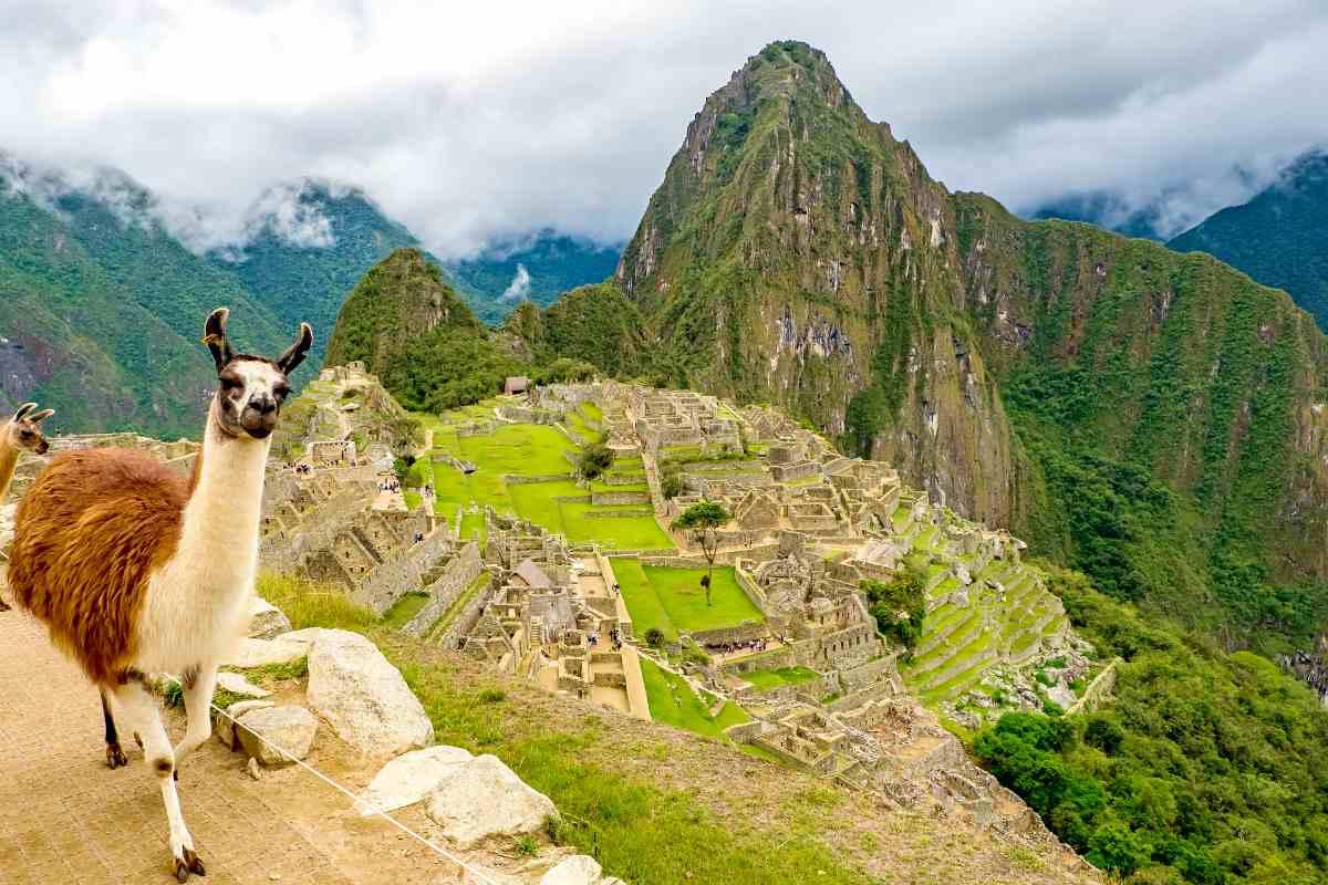 lama in Machu Picchu | Peru | best retirement countries