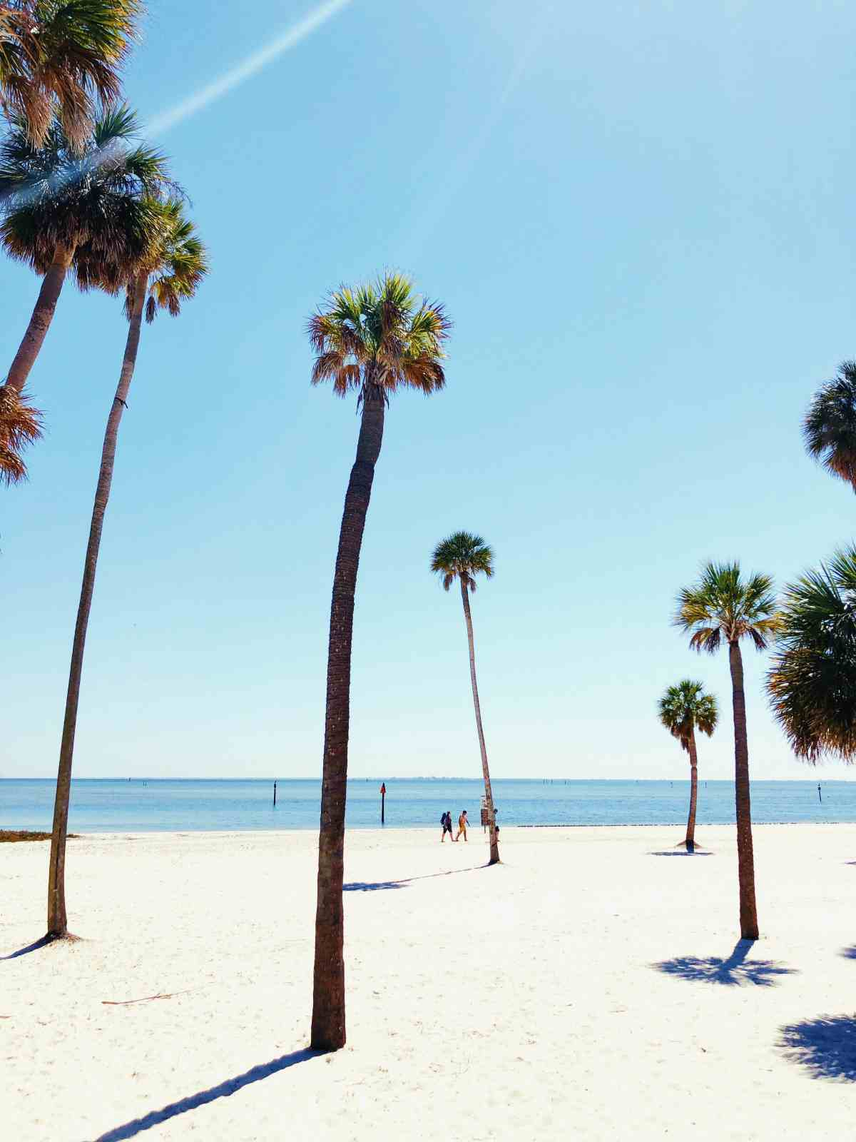 beach ocean tropical tree | Best Places To Retire In The U.S. | best places to retire
