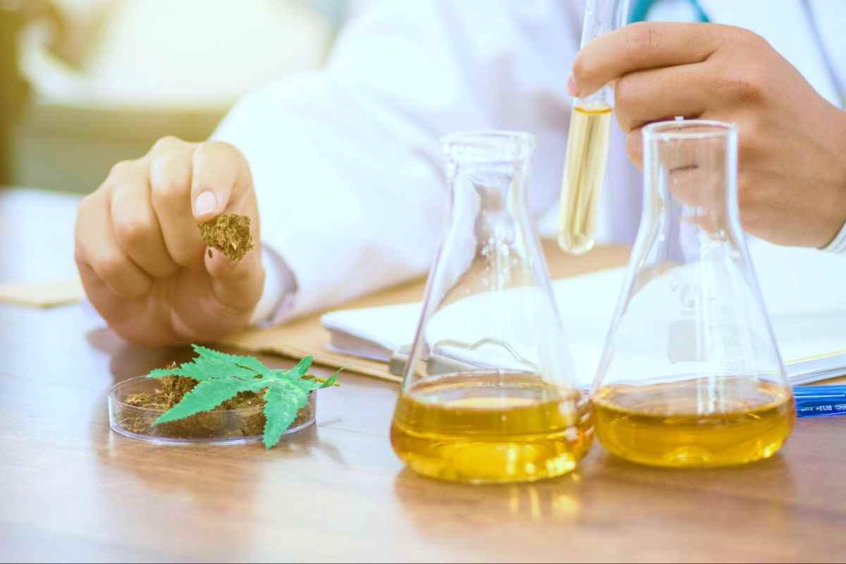 tweezers hold cannabis bud laboratory | Marijuana Investments Inside Your IRA | What Are The Risks? | marijuana stocks
