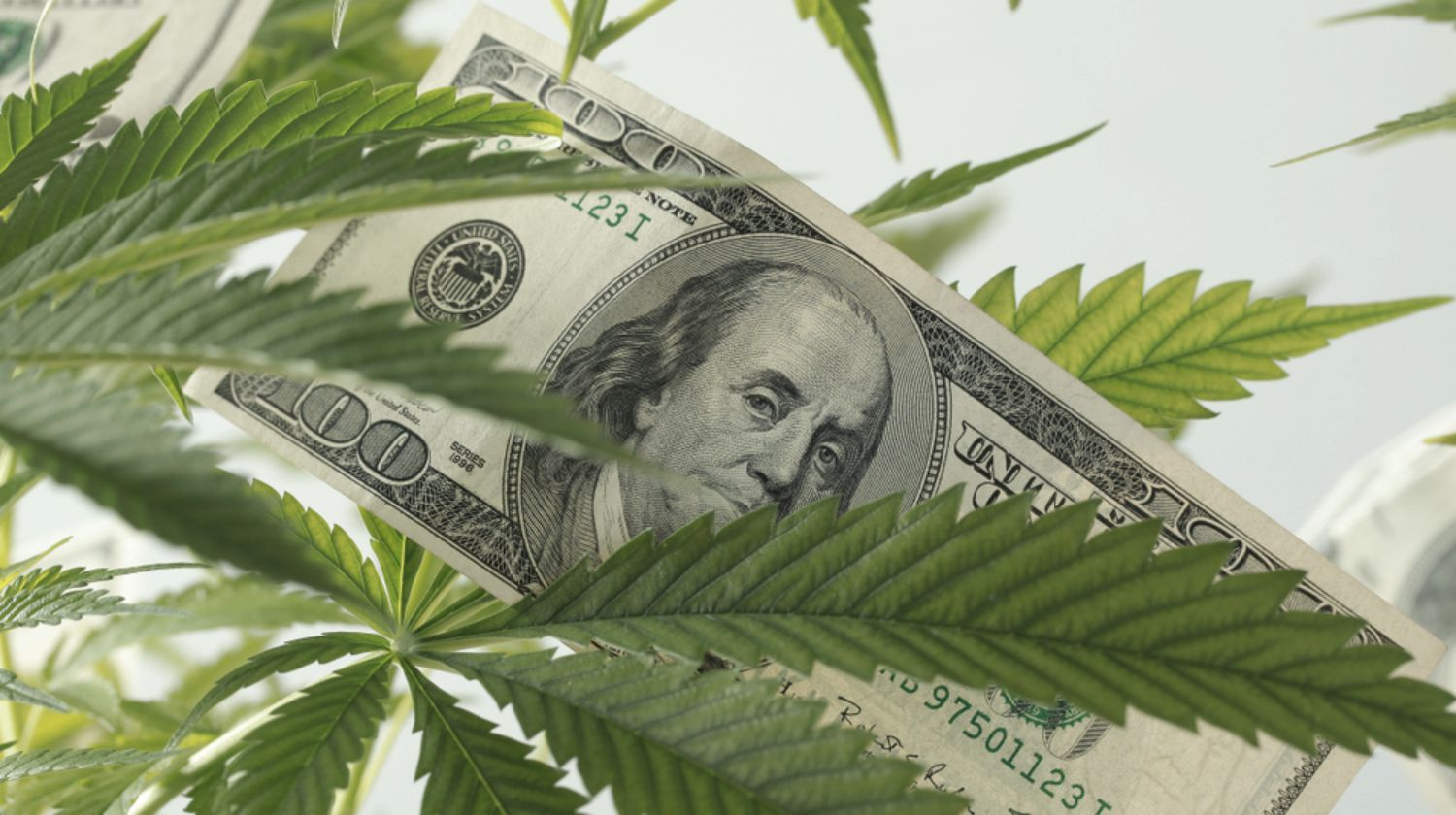 Investing In A Hemp Stock | Everything You Need To Know
